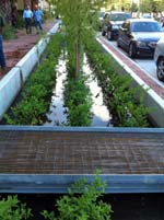 Bagby Street, Houston, Texas: On average, rain gardens remove 93% of the oil and grease on average from the roadway drainage system.